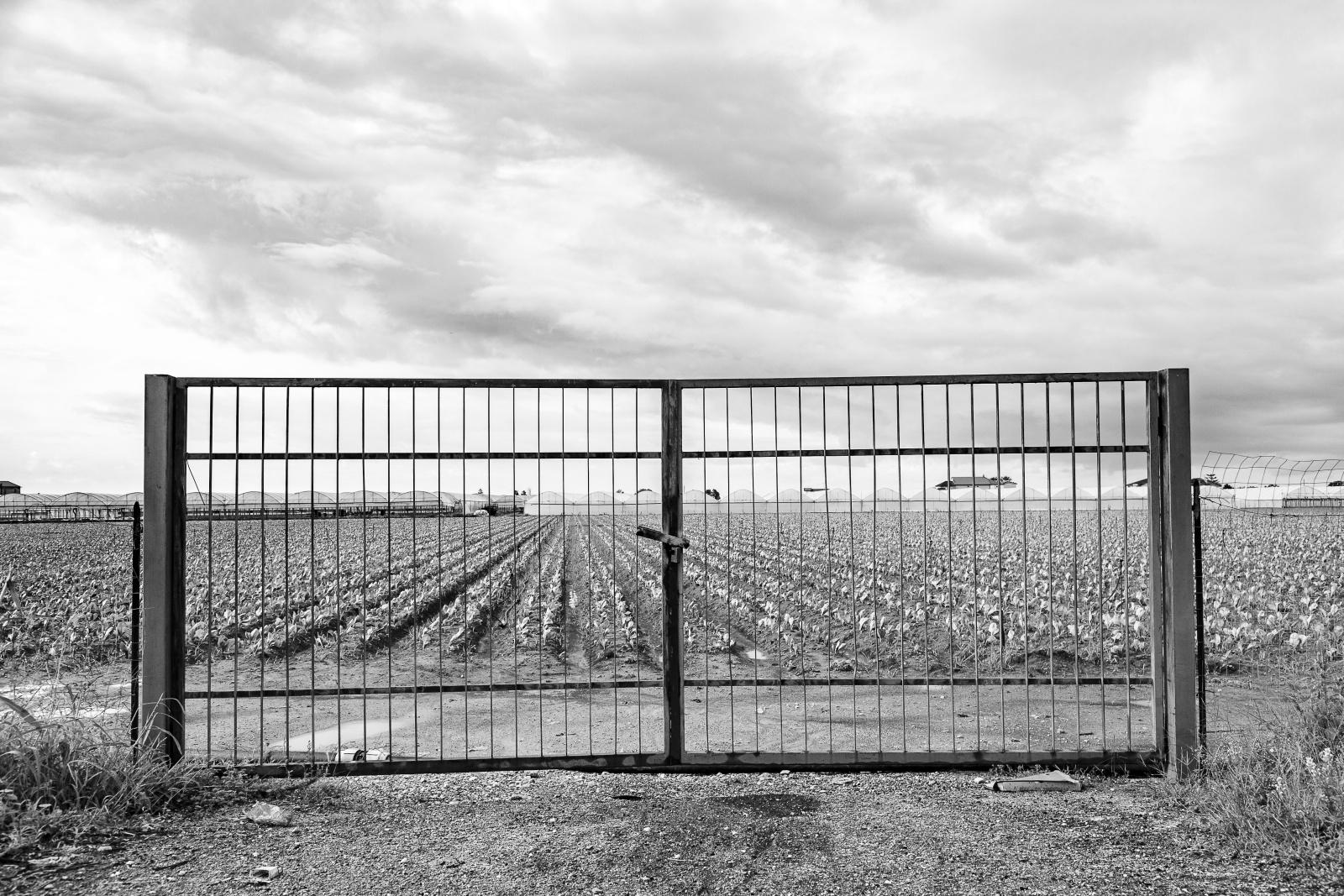 "Strada Provinciale 417 ""Aversana"" - foto 2014"